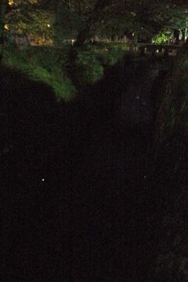 「哲学の道」沿いを流れる疏水分線上を飛ぶ蛍3匹