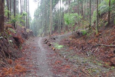 安祥寺山国有林の伐採作業に伴い、削られ埋められた安祥寺川源流部と古代遺物散布地