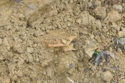 安祥寺山北尾根遺構にて梶川先生が発見した大きな土師器片