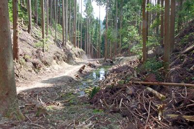 林野庁の工事により安祥寺川源頭及び大文字山西谷遺跡に生じた水溜まりと水抜き溝