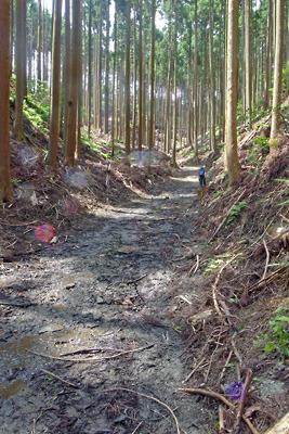 泥濘化する、安祥寺川源頭及び大文字山西谷遺跡を埋めてつくられた林野庁の林道