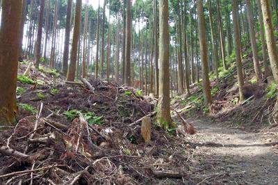 安祥寺川源頭及び大文字山西谷遺跡を埋めてつくられた林野庁の林道と谷を閉塞するような土塊
