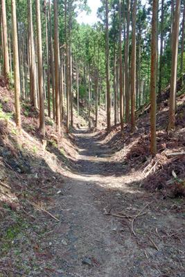 2019年に林野庁の伐採作業に伴う作業道工事で破壊された大文字山中の西谷遺跡と安祥寺川源頭部
