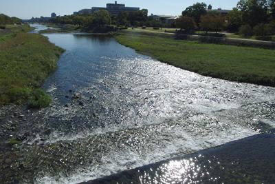 賀茂大橋の上からみた、秋晴れの陽射しに煌めく賀茂川の水面