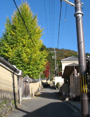 街樹や山が色づき明るい色を見せ始めた鹿ケ谷「如意越」の道と、道の右の和中庵や左の霊巌寺の土塀