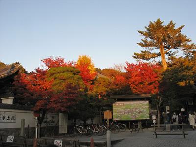 夕陽に照らされる銀閣寺門前の紅葉