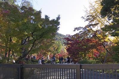 永観堂参観口横からみた有料庭園の紅葉