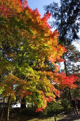 南禅寺境内にあった色づき途上の三色紅葉