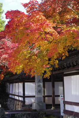 南禅寺天授庵門前の紅葉