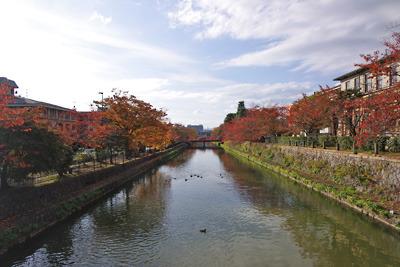 京都市街東部・岡崎の琵琶湖疏水縁の桜紅葉