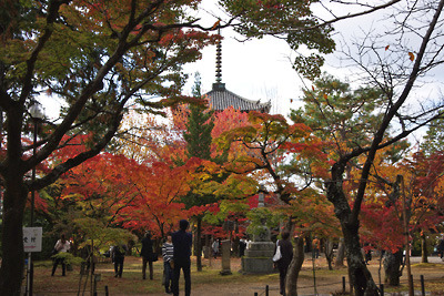 京都市左京区の丘上にある真如堂境内の紅葉