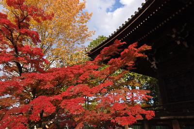 京都真如堂の本堂北側の楓紅葉