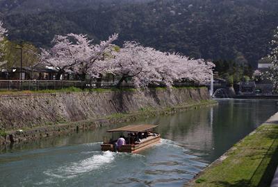 後背の京都東山の樹々と疏水の水面に映える京都市動物園の桜と十石舟