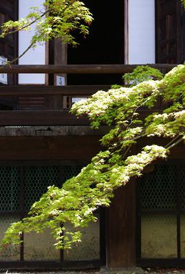 京都・真如堂本堂と新緑の楓の枝