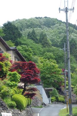 朝から黄砂に霞む京都大文字山山麓や山腹の新緑