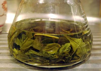 ポット内で葉を開く、電子レンジ製茶した京都東山の野生新茶葉